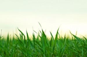 grass-1366796906dab